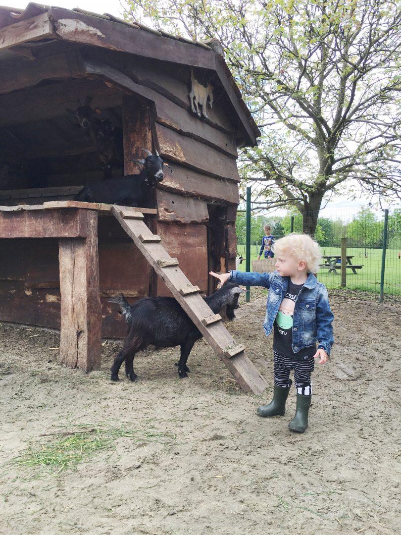 boerderijklassen - unicorns & fairytales