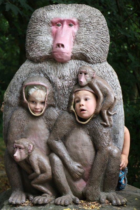 IMG 0079 e1470305088217 - Trips | Safaripark de Beekse Bergen