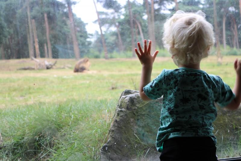 Beekse Bergen - Unicorns & Fairytales