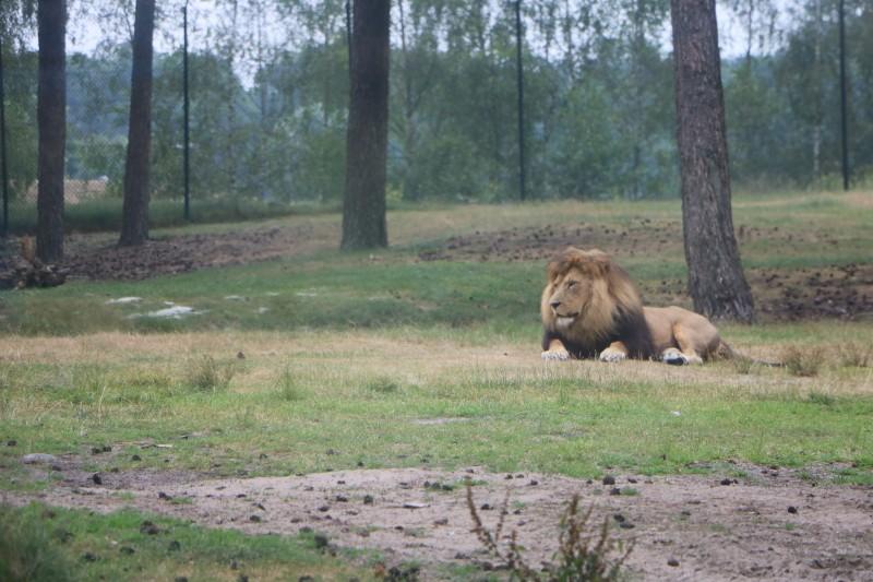 IMG 0086 - Trips | Safaripark de Beekse Bergen