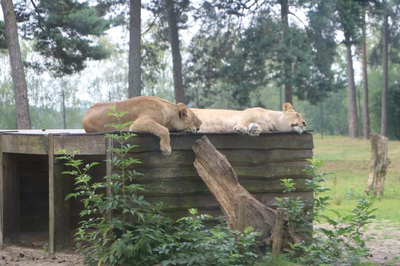 IMG 0087 - Trips | Safaripark de Beekse Bergen