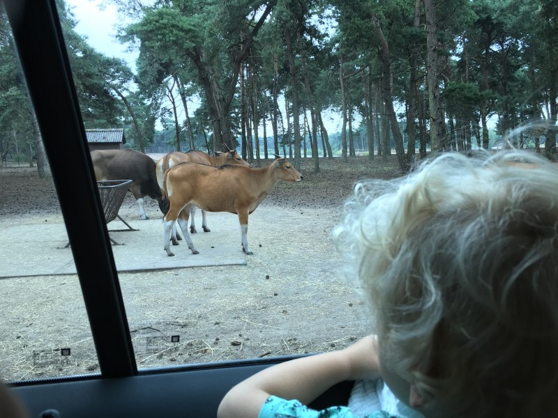 IMG 2437 2 - Trips | Safaripark de Beekse Bergen