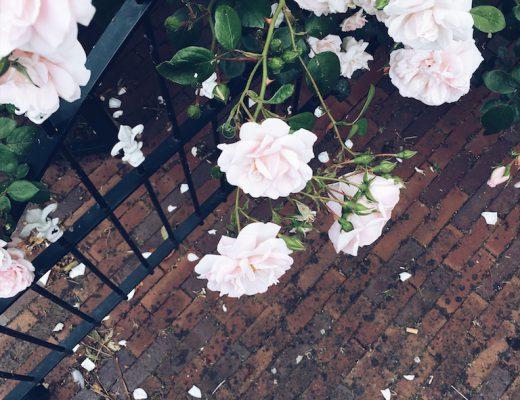 bloemen 520x400 - Voor mijn vriendin...