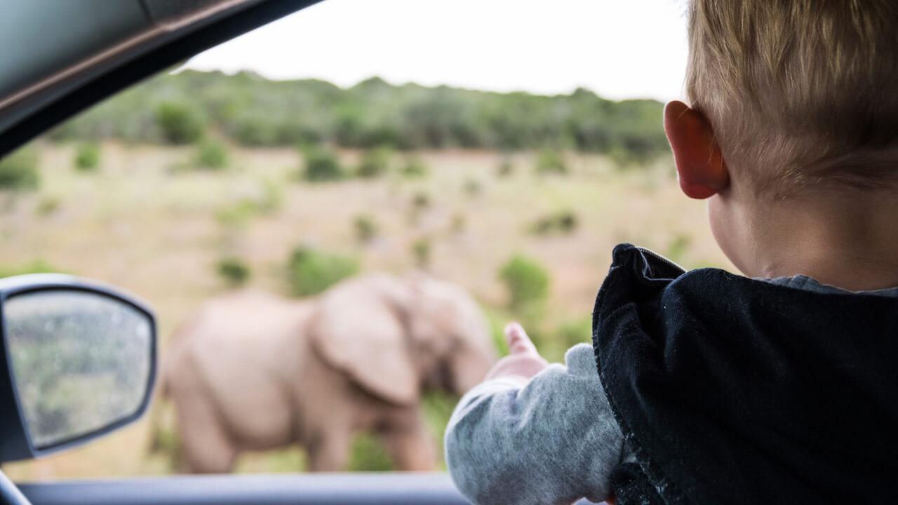 Zuid Afrika 164 of 221 - Een verre reis maken met een peuter? Het kan!