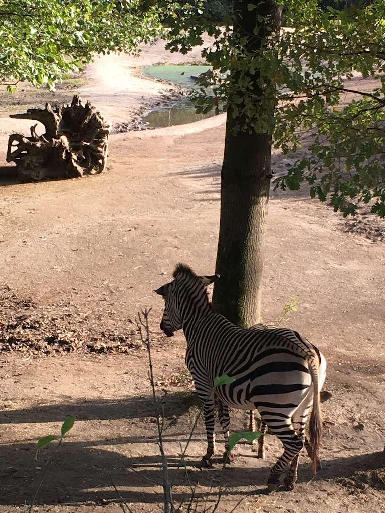 IMG 2905 - Wij gingen naar Landal Hoog Vaals, genieten van de natuur