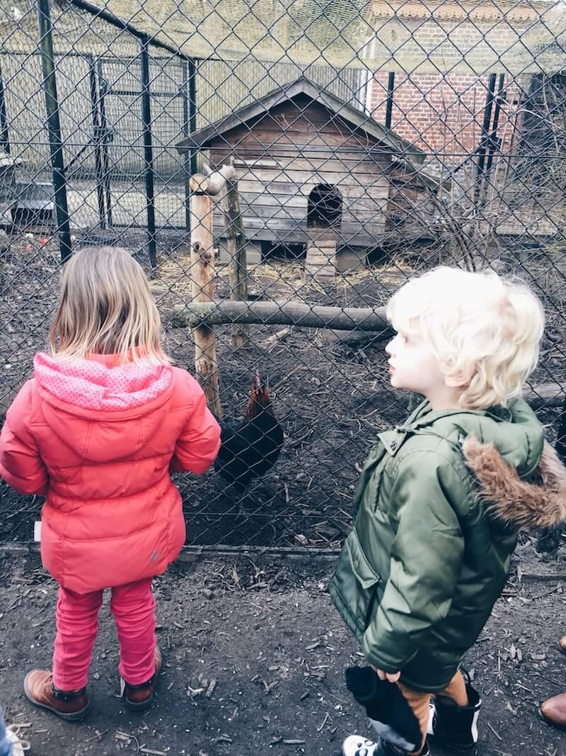 F4A7E153 1D9B 4778 8B2B 5737D3C35D46 - Diary 110  Een heerlijke namiddag kinderboerderij