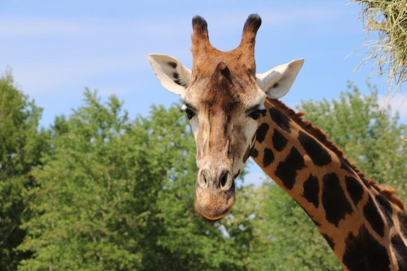 Safari resort beekse bergen - unicorns & fairytales