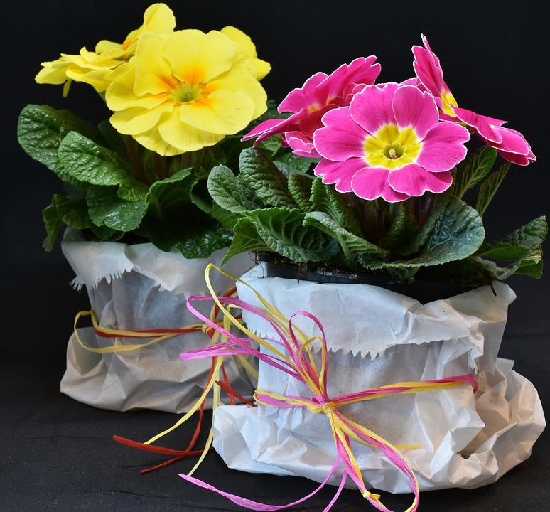 primroses 3132310 960 720 - 11 originele moederdag cadeaus om zelf te maken
