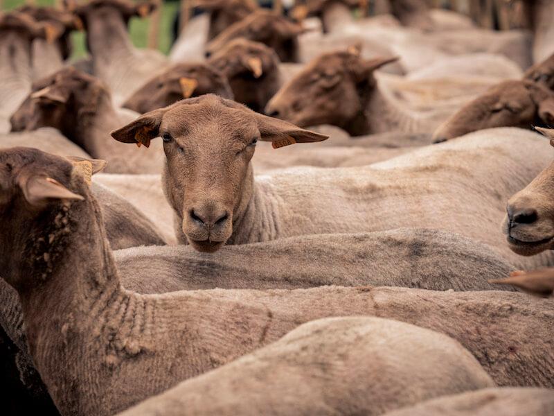 Op stap met de herder - Zomervakantie tip voor ontdekkers: wonderweekend en Zomerfestival in Bokrijk + WIN