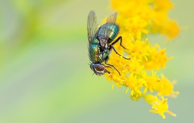fly 459327 640 - 25 middeltjes tegen insecten