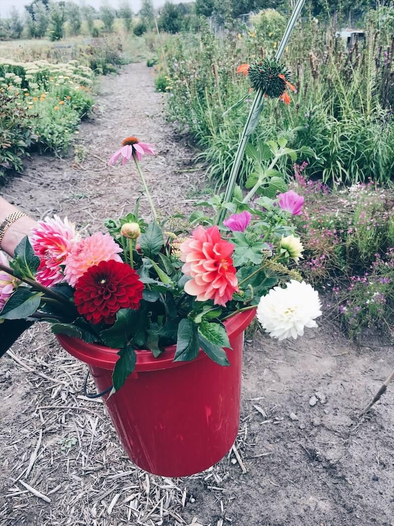 84BB29B0 8BE7 45F0 847D 15F0B26877BB - Wij gingen zelf onze bloemen plukken op moederdag