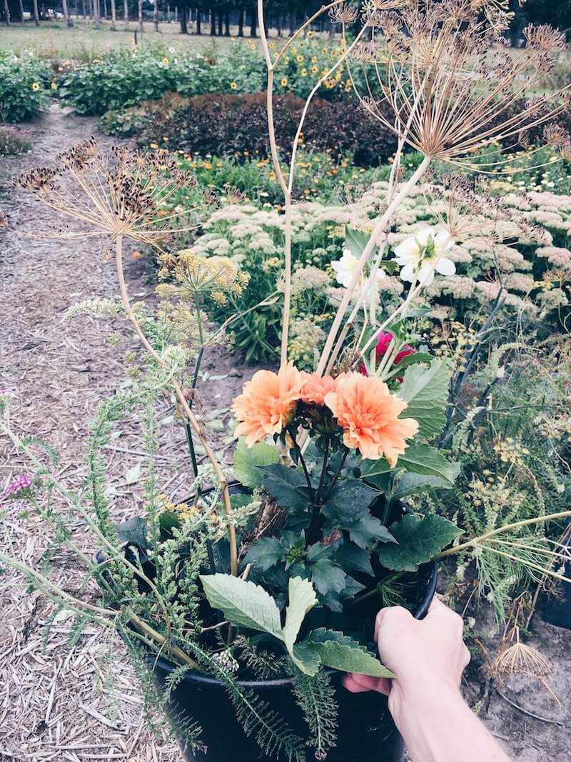 DDF1D080 4F62 4629 9650 AD885DBE3670 - Wij gingen zelf onze bloemen plukken op moederdag