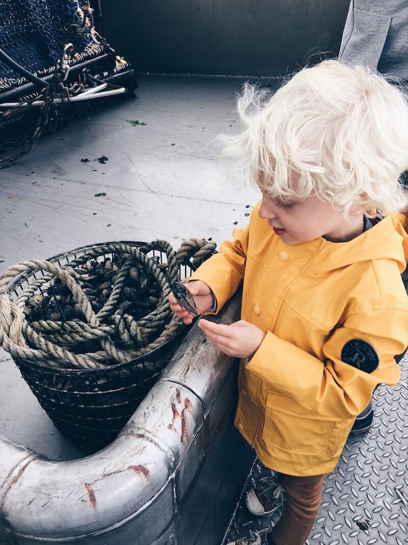 A5F0056C 6806 4537 BE02 89B1907E6F02 - Waarom ik vanaf nu enkel nog duurzame vis koop en jij dat ook zou moeten doen...