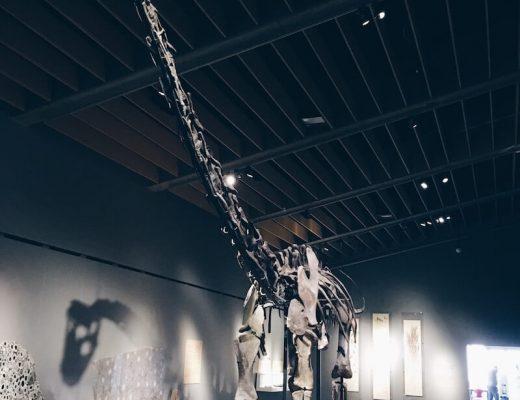 museum met kinderen - unicorns & fairytales