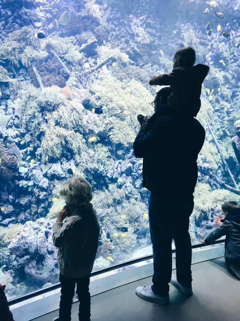zoo antwerpen - unicorns & fairytales