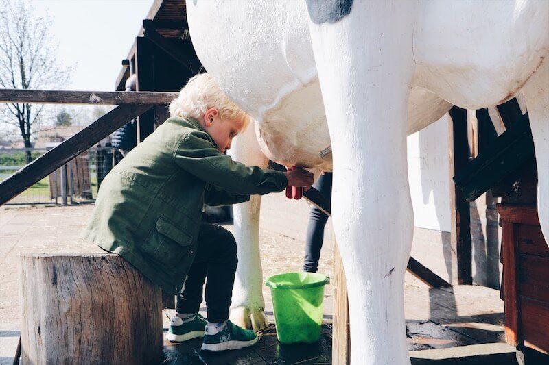 kinderboerderij in nederland - unicorns & fairytales