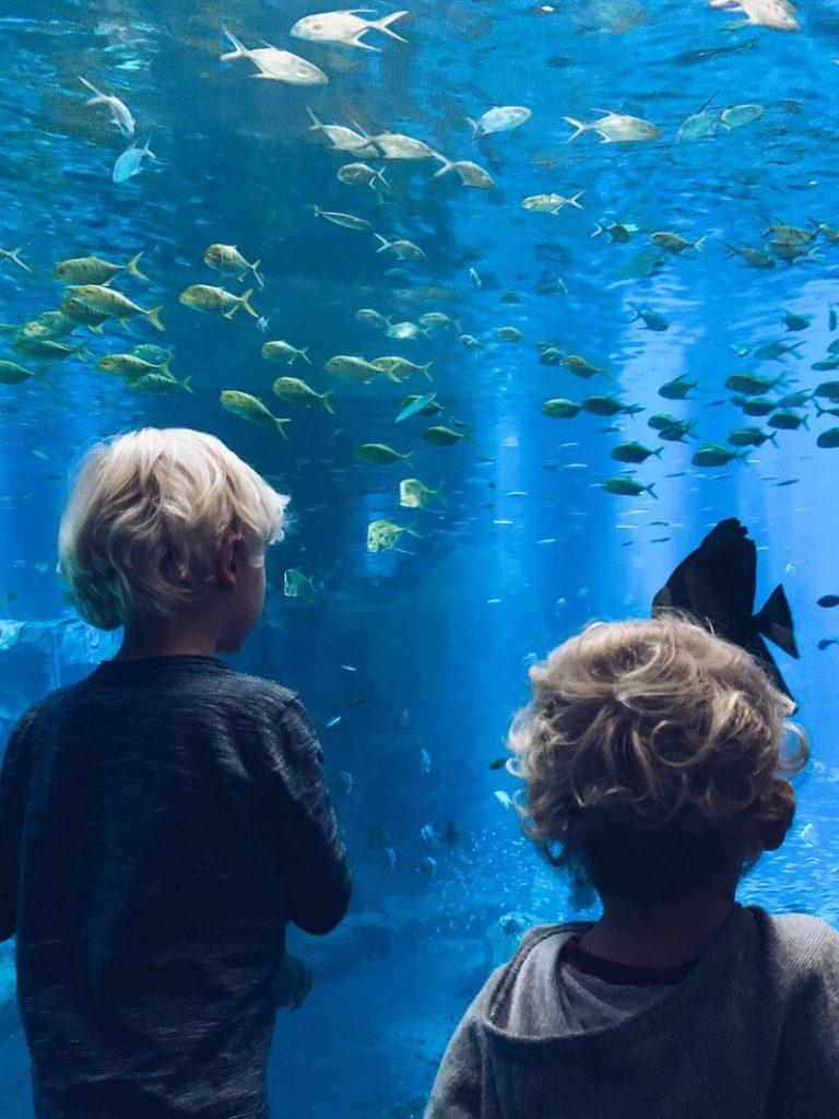 CA24AA0B 20E8 4467 97B4 9CE8D224EB3C 768x1024 - Wij gingen naar Nausicaa, het grootste aquarium van Europa!