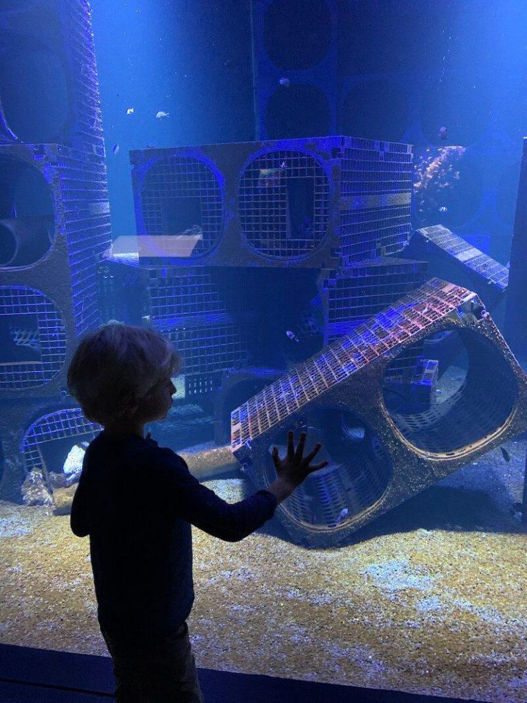 IMG 7418 768x1024 - Wij gingen naar Nausicaa, het grootste aquarium van Europa!