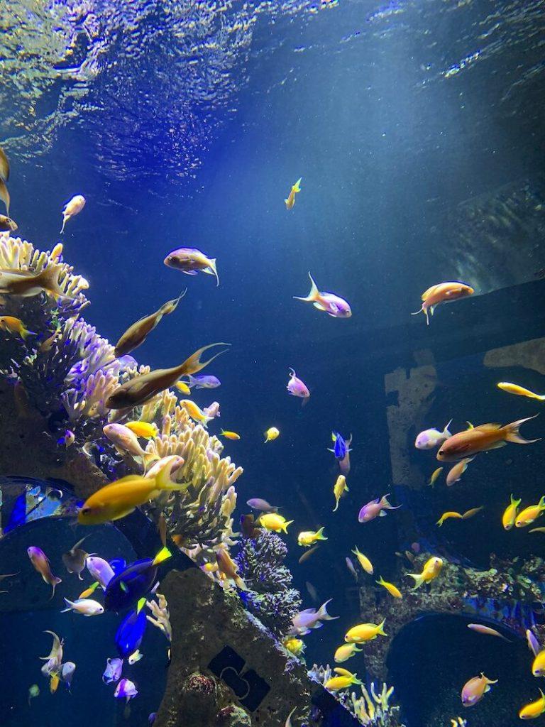 IMG 7425 768x1024 - Wij gingen naar Nausicaa, het grootste aquarium van Europa!