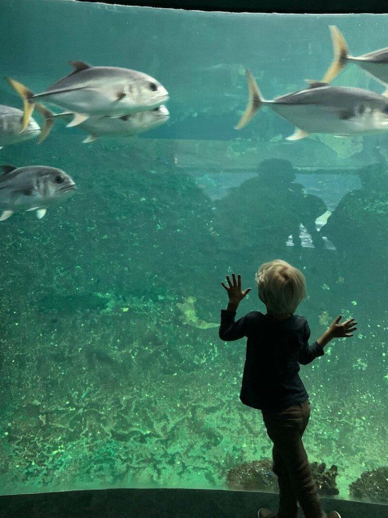 IMG 7510 768x1024 - Wij gingen naar Nausicaa, het grootste aquarium van Europa!