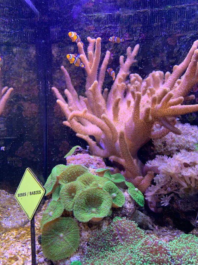 IMG 7519 768x1024 - Wij gingen naar Nausicaa, het grootste aquarium van Europa!