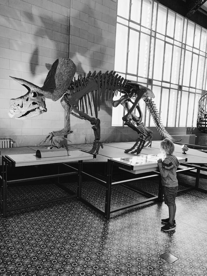 natuurwetenschappen voor kinderen - unicorns & fairytales