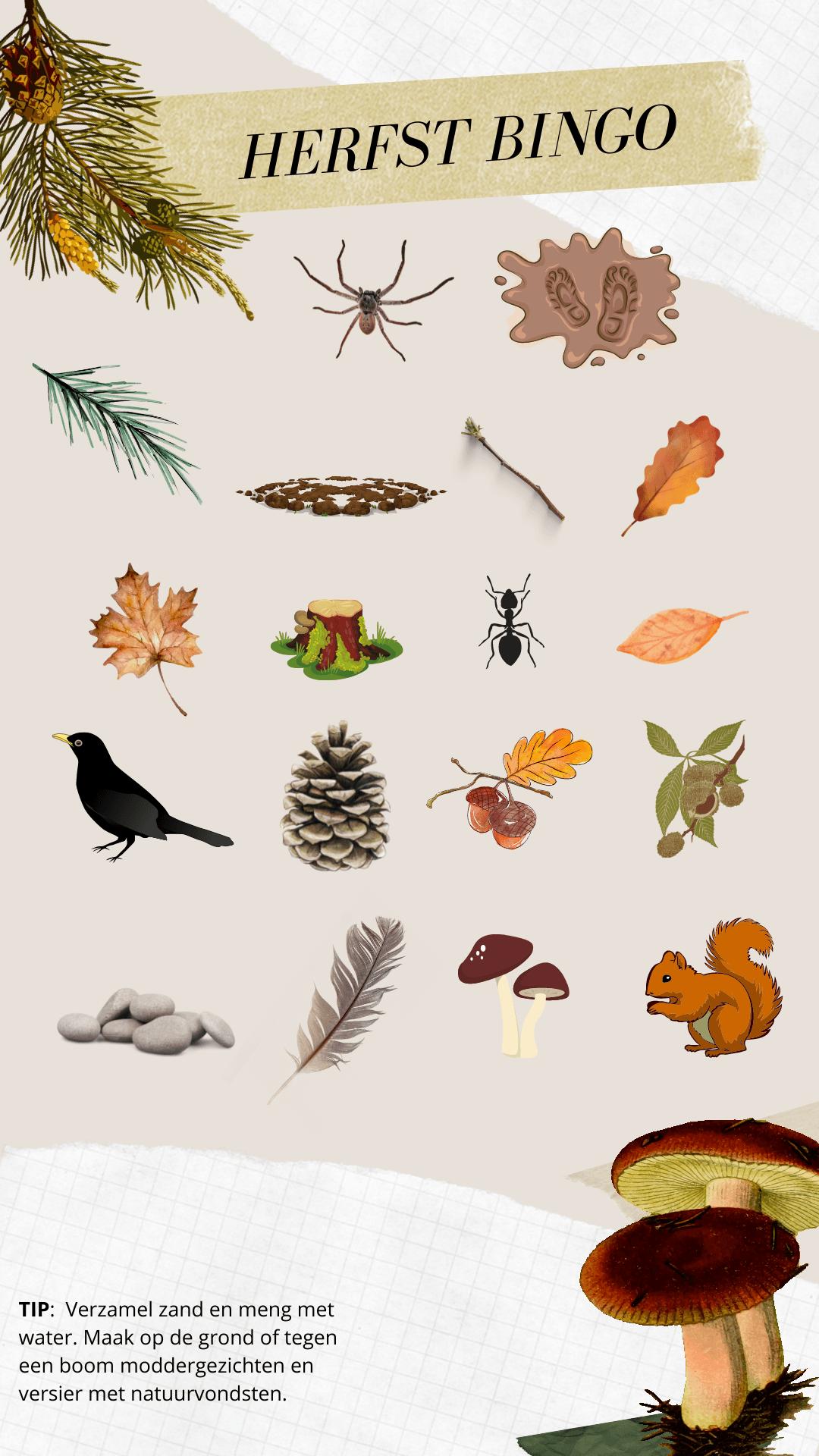 Herfst BINGO - Toffe activiteiten, (les)ideetjes en (boeken)tips tijdens de Week van het Bos
